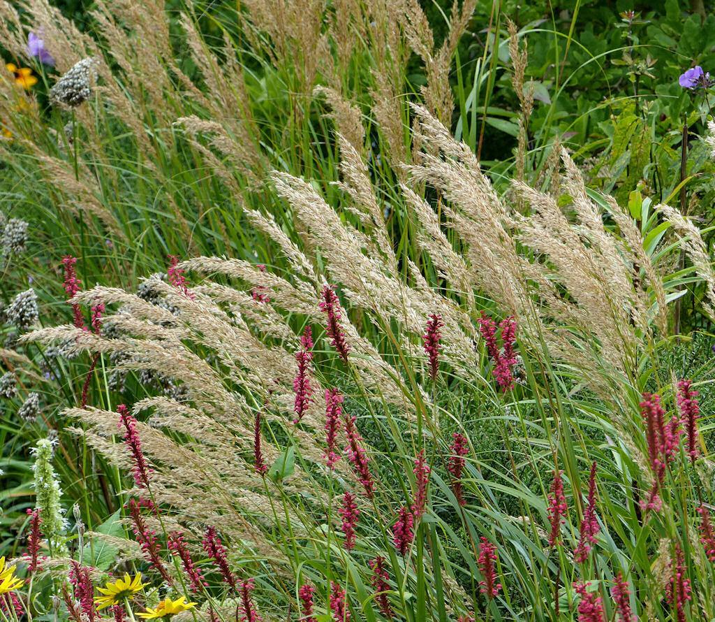 Pflanzbeispiele Mit Gräsern über gräser staudenfreunde