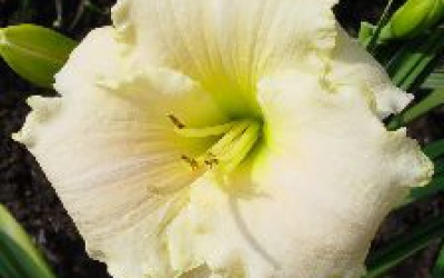 White Rose Memorial