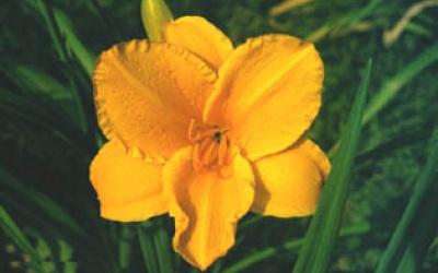 Orange Bowl (McEwen 73, tet)
