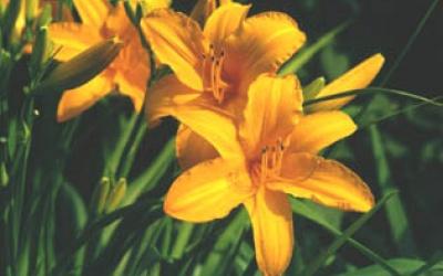 Orange Prelude (McEwen 74, tet)