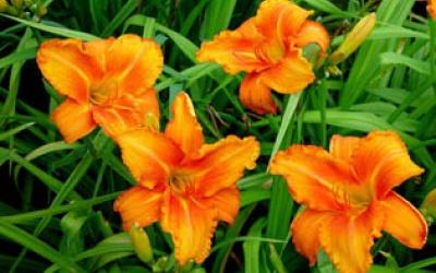 Orange Von Falkenrehde (Tamberg 04, tet)