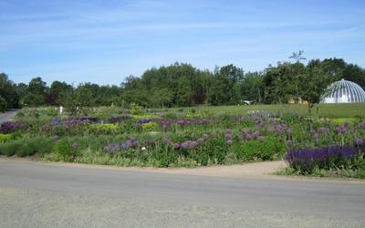 Der Feldpark mit dem Blumenfeld (4000 qm, 15000 Stauden)