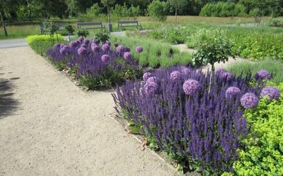 Ein Teil des Blumenfeldes