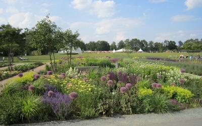 Das Blumenfeld mit Blick über die große Wiese