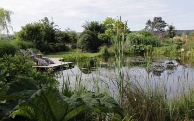 Der Teich am Gräsergarten   Foto © 2017 Angelika Pickel