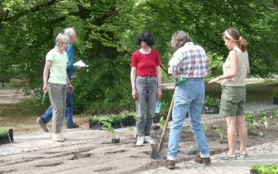 Die Pflanzlöcher markieren die Reihen, in denen die Hosta-Züchtungen und Päonien des verstorbenen Staudengärtners Heinz Klose gepflanzt werden. (c) Margit See