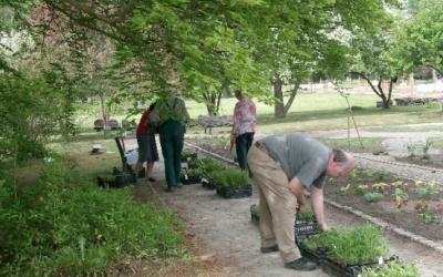 Die Leitpflanzen stehen, nun kommen die Begleit-, Einfassungs- und Füllstauden. (c) Margit See