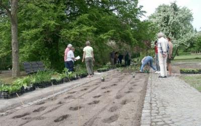 Der schattigere Teil des Themenbeetes zu Ehren von Heinz Klose ist fertig bepflanzt, im sonnigeren Teil geht es weiter. (c) Margit See