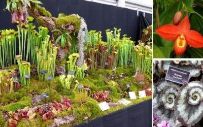 """Sarracenia mit Phragmipedium (oben); Begonia """"Escargot"""" (rechts)"""