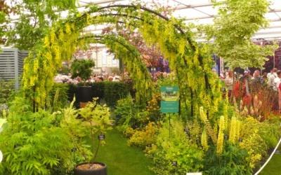 Der gelbe Garten
